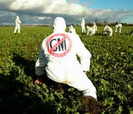 GMO-crop-vandalism